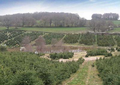 plantation_des_sapins_cruard_boudinel
